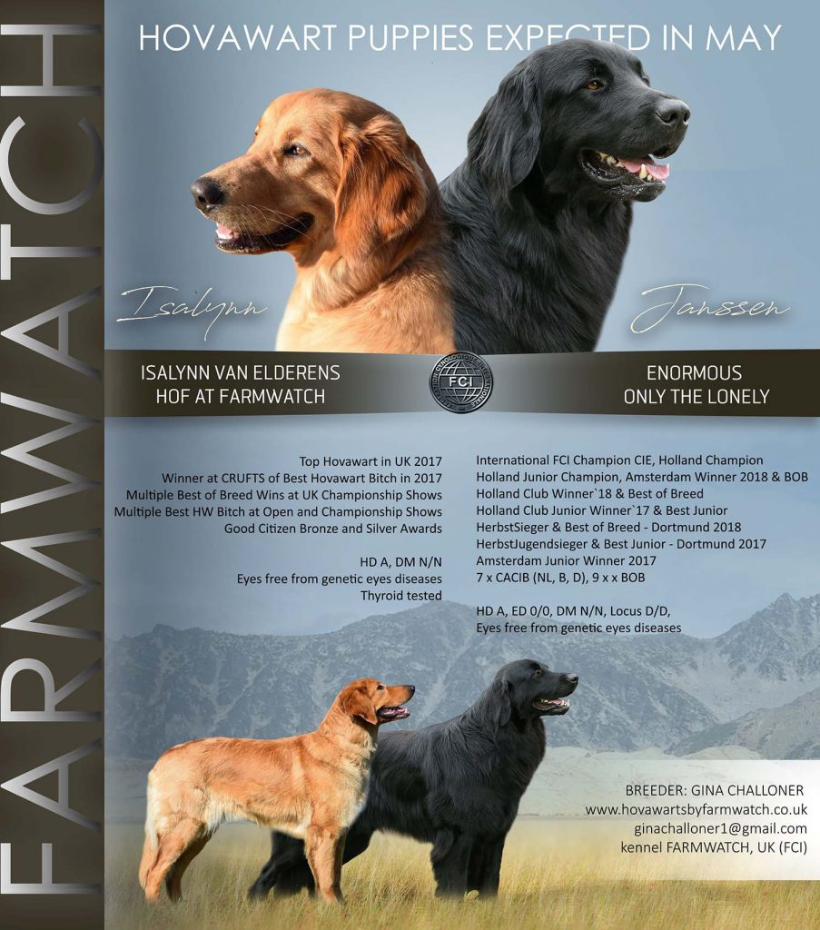 Hovawart puppy announcement showing sire and dam